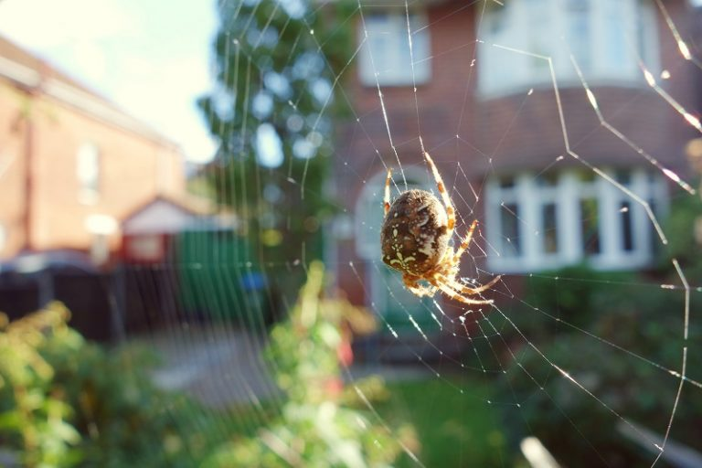 spider webs (difference between cobwebs and spider webs)