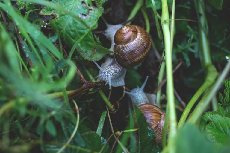 snail (Difference between Slug and Snail)