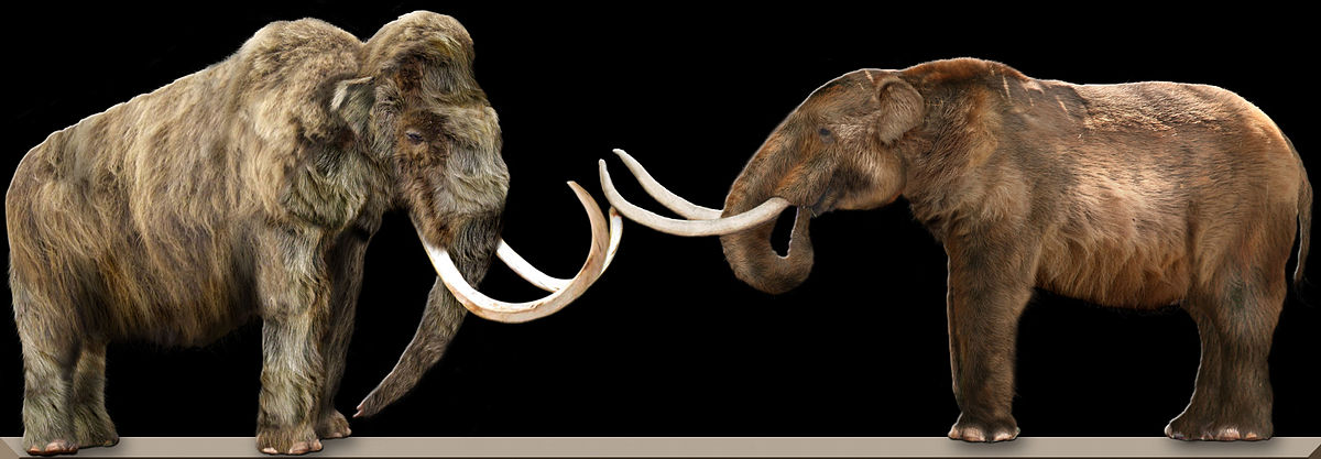 Difference Between Mastodon and Mammoth