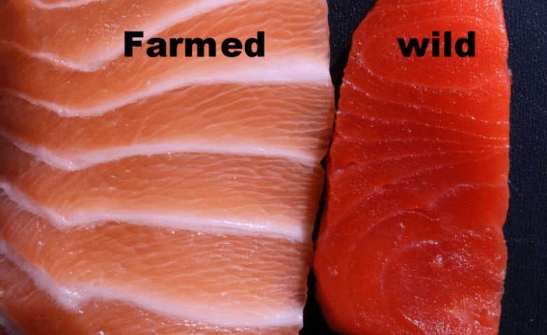 Difference between Farm-Raised and Wild Salmon